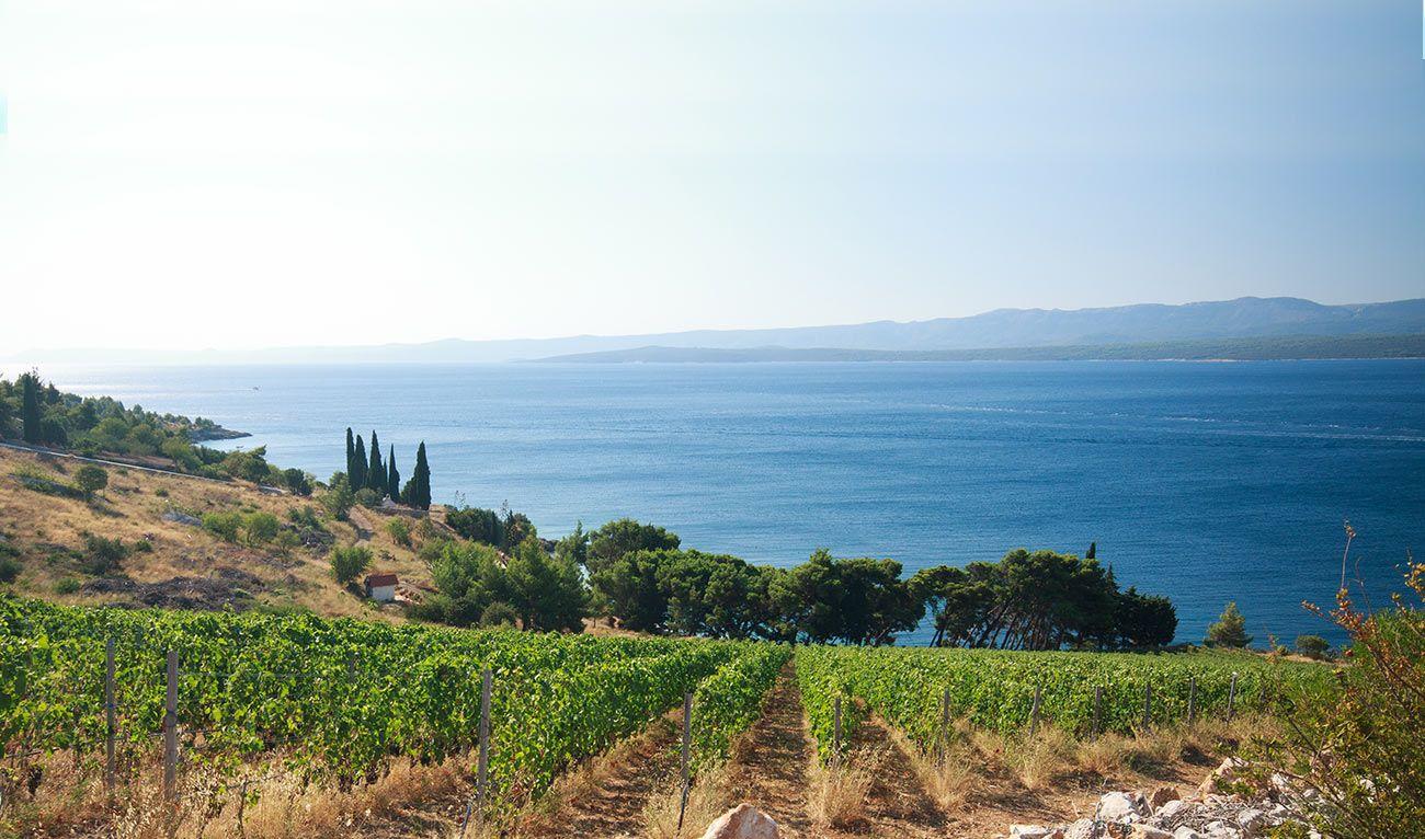 Viaggio in Calabria attraverso i suoi vini